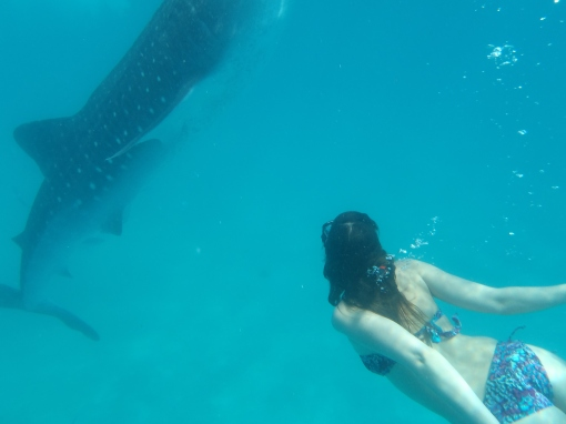 Swimming with whalesharks!