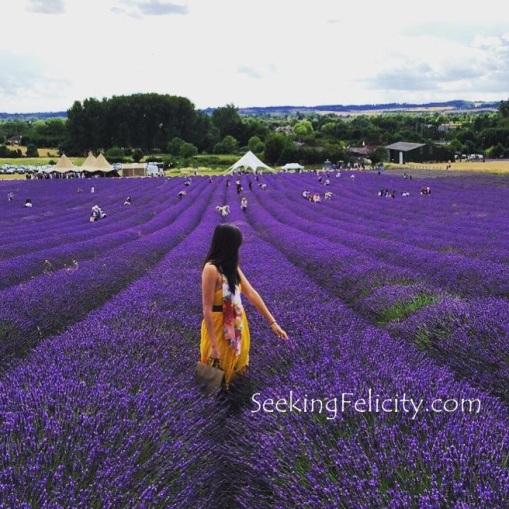 seeking felicity