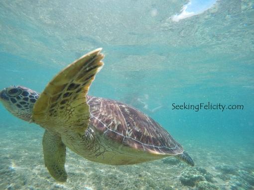 Sea turtle!!! <3