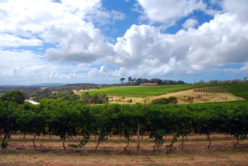 Image 2 - Australian wine tour, Margaret River