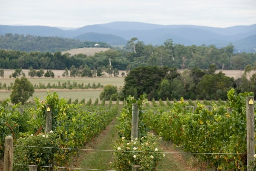 Image 4 - Australian wine tour, Yarra Valley